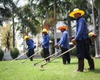 บริษัทรับบริการบำรุงดูแลรักษาสวน บริการตัดหญ้าจัดสวน