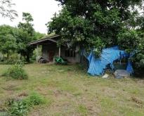 ขายด่วน ที่ดินพร้อมบ้าน 2 หลัง ราคา 3,980,000 บาท