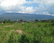 ขายที่ดิน 20 ไร่อยู่ติดถนนทางขึ้นสถานที่ท่องเที่ยวอุทยานแห่งชาติภูกระดึง