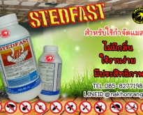 Stedfast