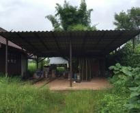 **ลดราคา**ขายที่ดินเปล่า (1-1-9) พร้อมบ้านชั้นเดียว + บ้านไม้ 2 หลัง + อาคา
