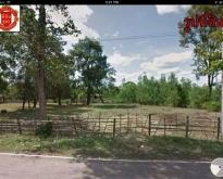 **ลดราคา**ขายที่ดินเปล่า (11-3-46) พร้อมบ้านชั้นเดียว 2 หลัง บ้านไชยวานวัฒน