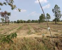 ขายหรือเช่า ที่ดิน สามารถทำการเกษตรได้ อำเภอสามชุก จังหวัดสุพรรณบุรี